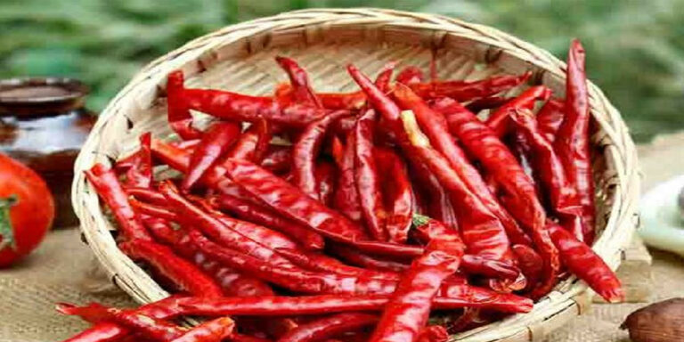 Kanja millagai / Dry red chillies